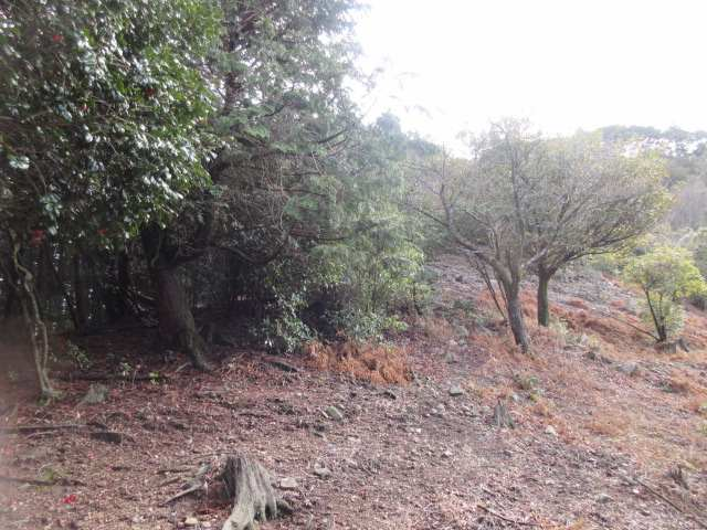 IMG0026JPG柚木谷への登り開けた