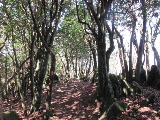 IMG0039JPG古処山への快適道