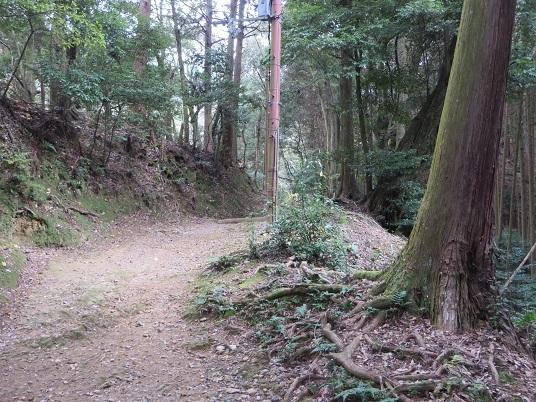 21019,12,8醍醐寺 068-2w