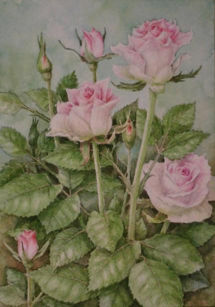 バラ「リメンブランス」 1909