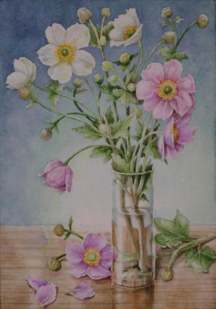 秋明菊 1910