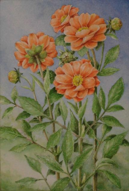 オレンジ色のダリア 1910