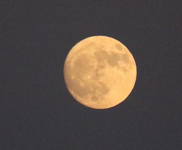 ほぼ丸いお月様
