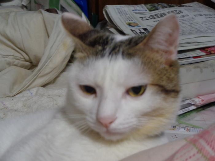 daichi0132.jpg