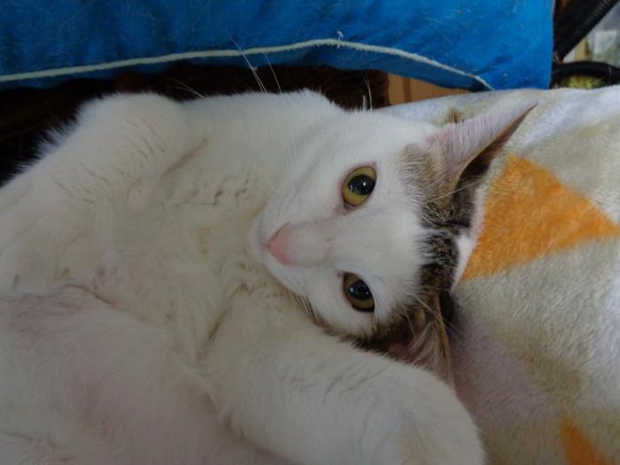 daichi0146.jpg