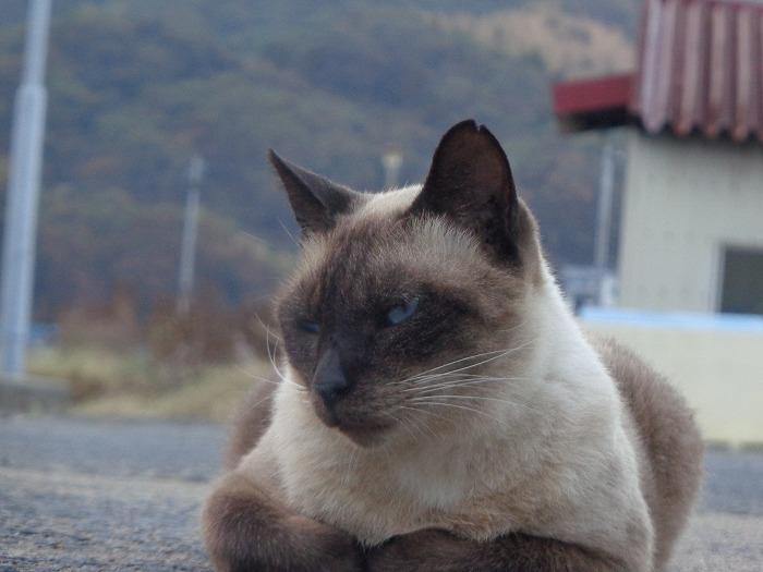 shamuo0157-s.jpg