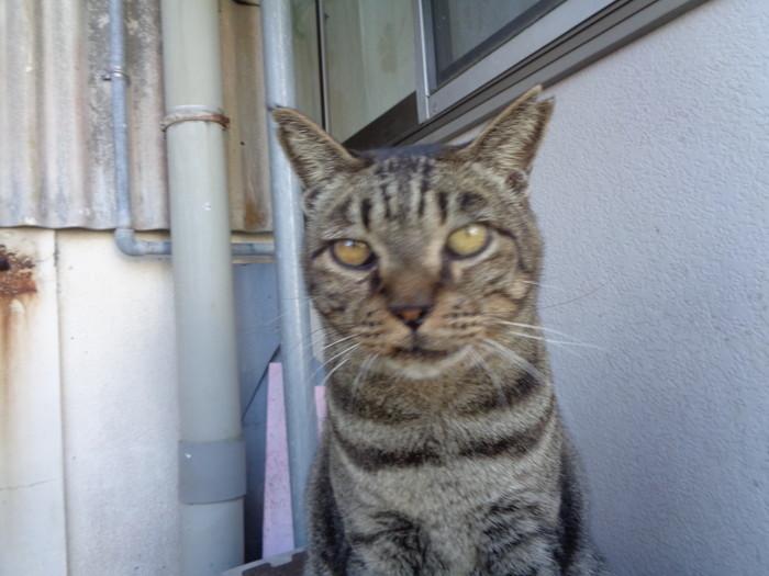 torakichi0127.jpg
