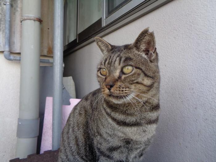 torakichi0130.jpg