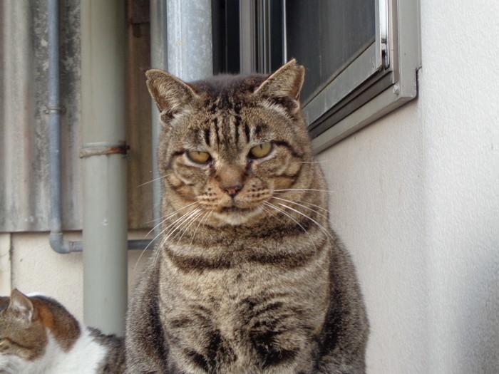 torakichi0141.jpg