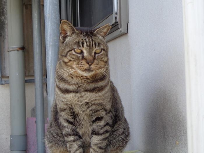 torakichi0144.jpg