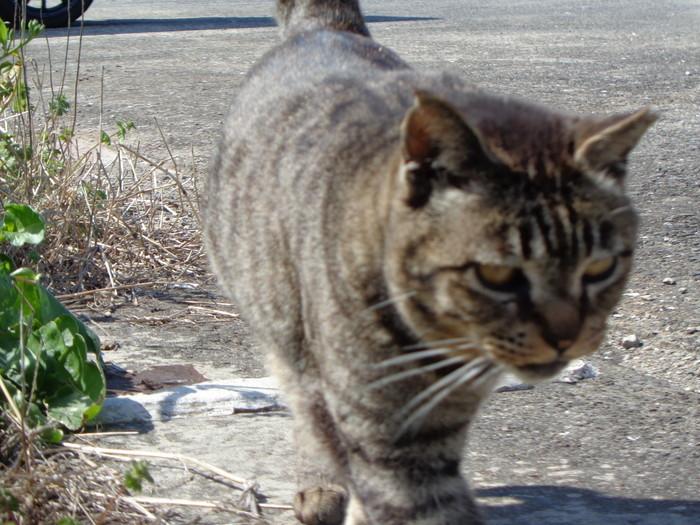 torakichi0146.jpg