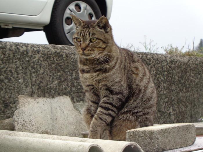torakichi0148.jpg