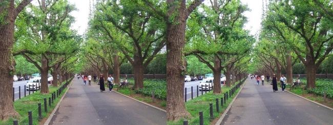 神宮外苑いちょう並木②(平行法)