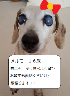 191231p4.png
