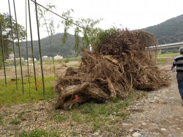 山積みの木の根