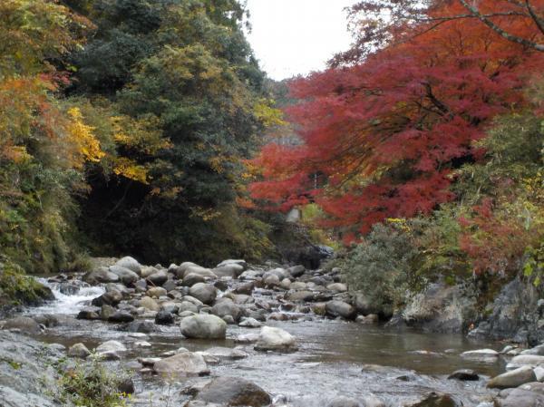 粥川の紅葉