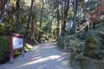 石上神宮・大イチョウと山之辺の道12