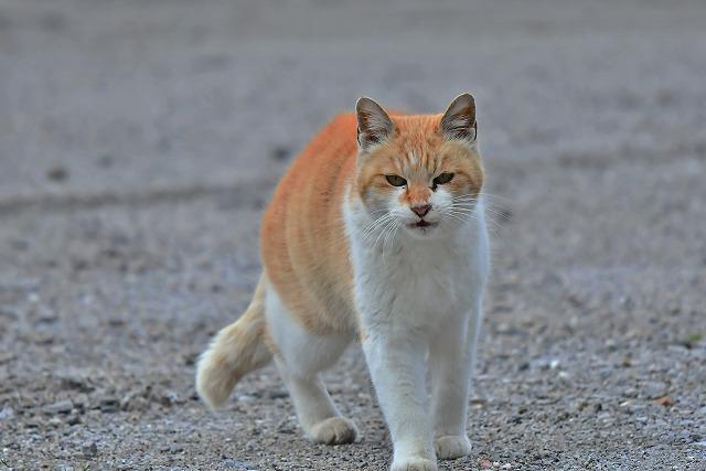 メジロのポイントに猫ちゃん発見