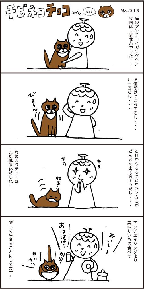猫の最先端のエイジングケア、迷った末の結論