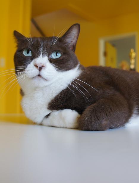 びっくり! 猫のエイジングってけっこう目に見えるものだったりする!