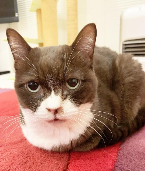 人間以上??? 猫の最先端のアンチエイジングケアに驚くばかりです!