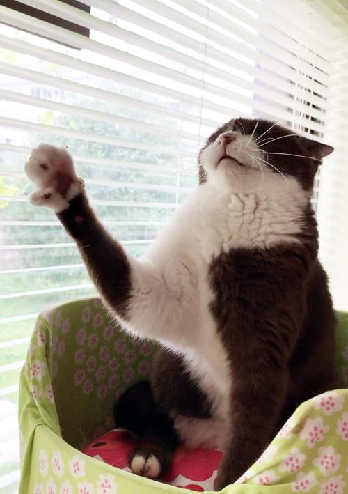 何だろう?この理不尽さ。猫が訴える!