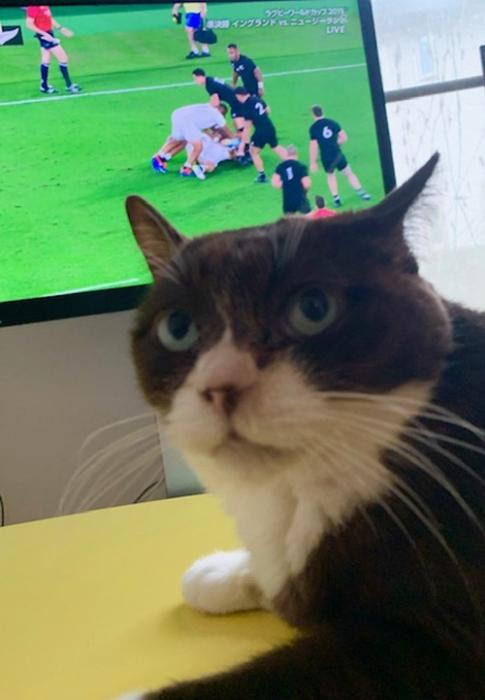 ラグビーワールドカップ準決勝 ニュージーランド対イングランドにゃん
