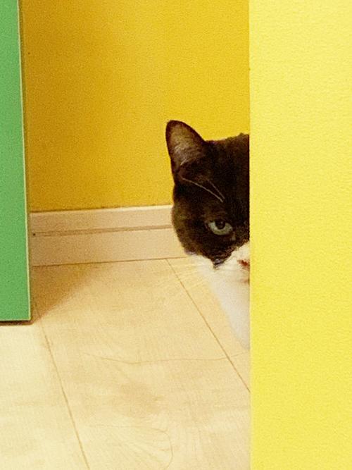 どうしてそこに!猫がいる!