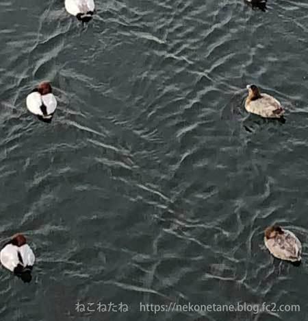 鳥さんたち写真2