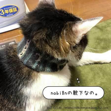 nobi8nの靴下なの。