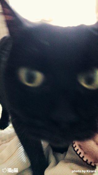 黒猫遠近法