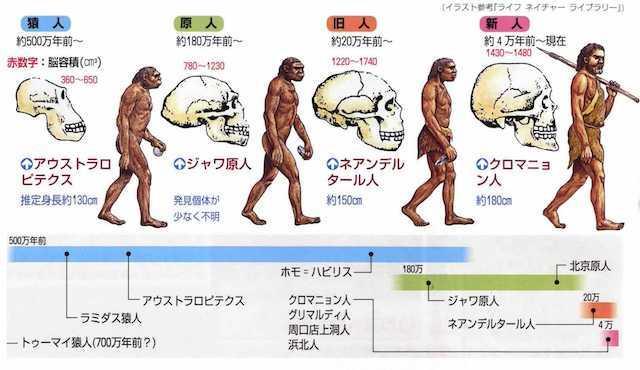 20191002 脳の進化