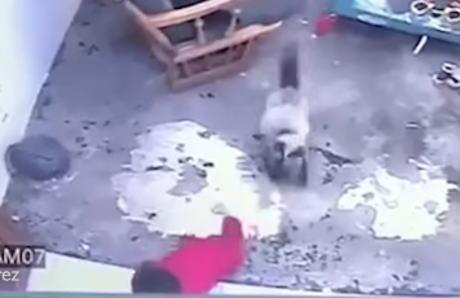 母親が目を離した隙にベビーベッドから抜け出した幼児、階段から転げ落ちる寸前に→ 必死に押しとどめようとするネコが話題に(動画)