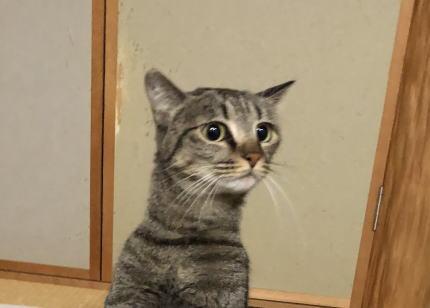 想像の上を行く良い姿勢で正座しているねこさんが激写される(画像) … 「これ、絶対中に人はいってるよね…猫の正座とか、よくわからん子だ」