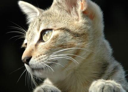 2月22日は「にゃんにゃんにゃん」の語呂で『猫の日』 … 損害会社調査の『猫の名前ランキング2020』、総合1位の名前は「ムギ」