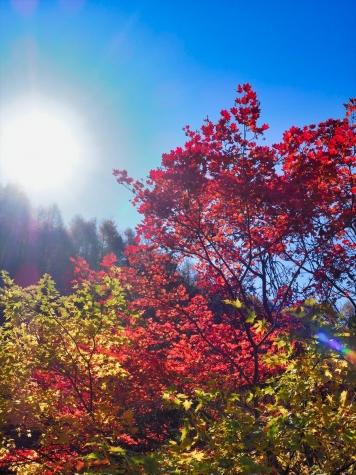 白滝の紅葉【日塩もみじライン】