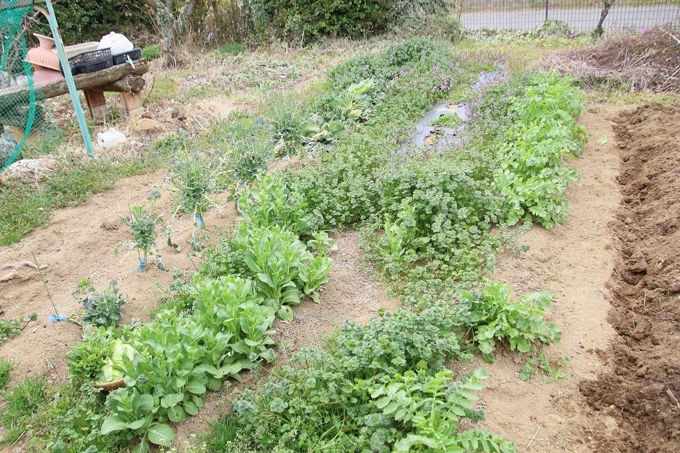 111手つかずの菜園(4割程度).jpg