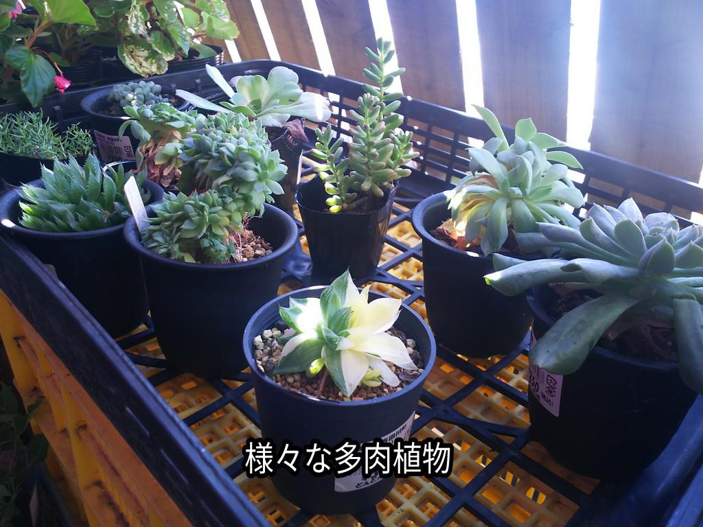 植物 和歌山 多肉