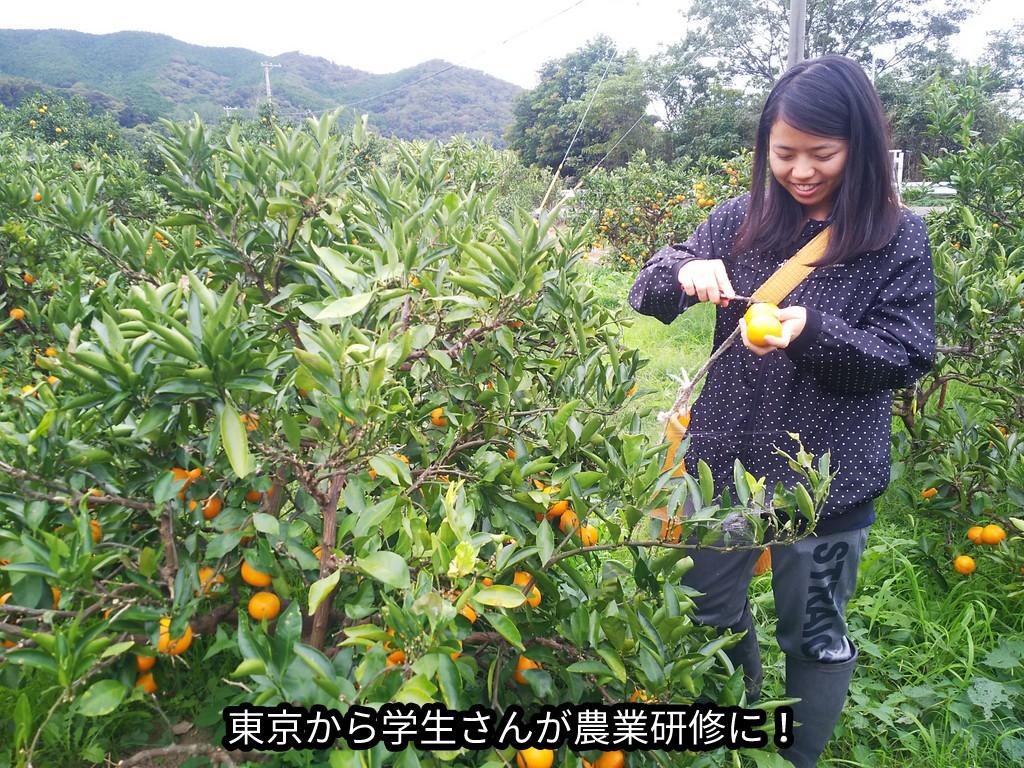 東京から学生さんが農業研修に!