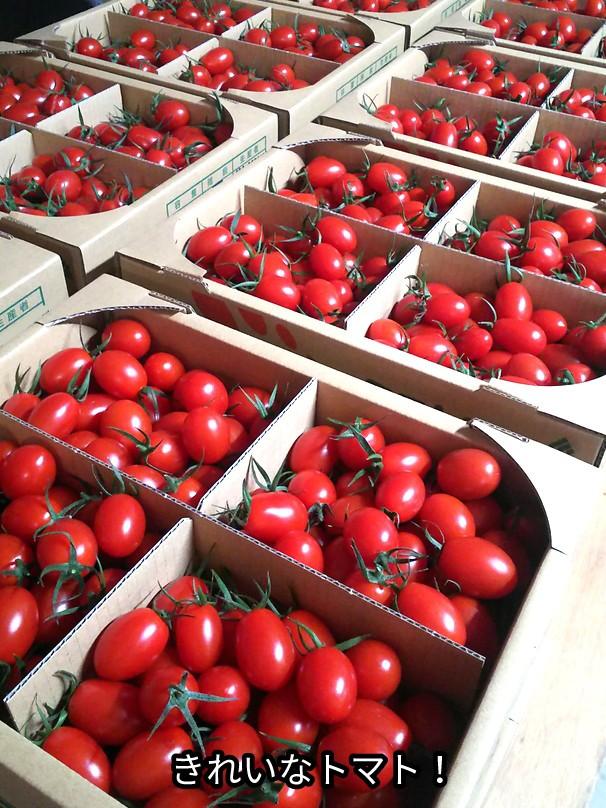 きれいなトマト!