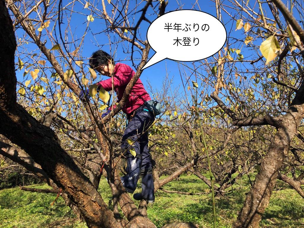 半年ぶりの木登り