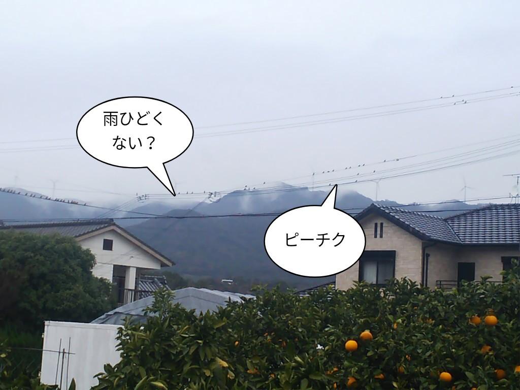 雨ひどくない?