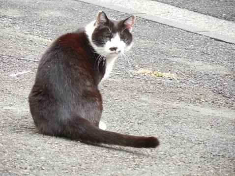 通りすがりに見かけた猫(793)