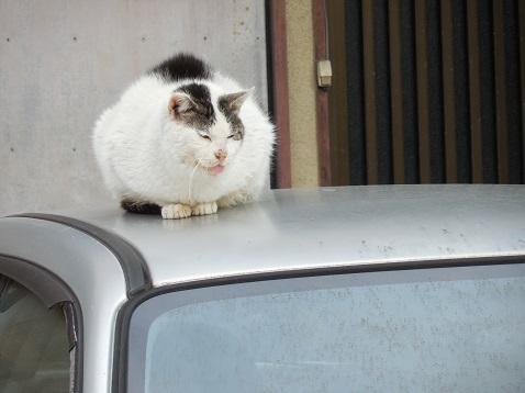 通りすがりに見かけた猫(794)