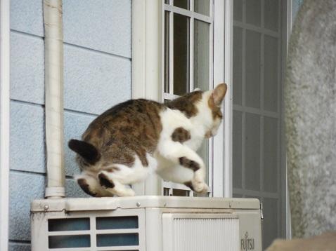 通りすがりに見かけた猫(795)