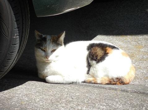 通りすがりに見かけた猫(796)