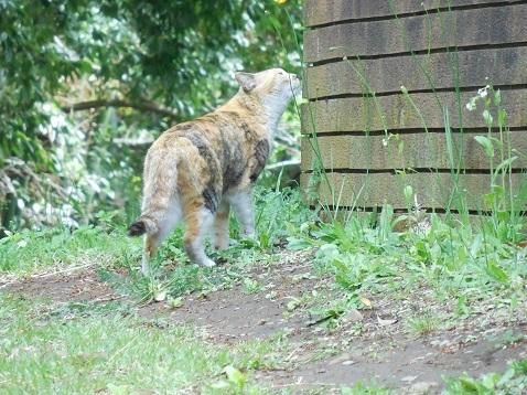 通りすがりに見かけた猫(798)