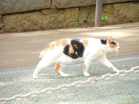 通りすがりに見かけた猫(799)