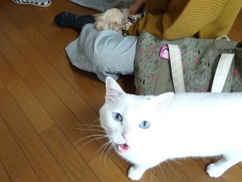 みぞれ&柚子