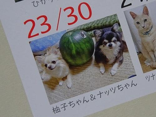 『ワンコ・ニャンコ365日カレンダー』